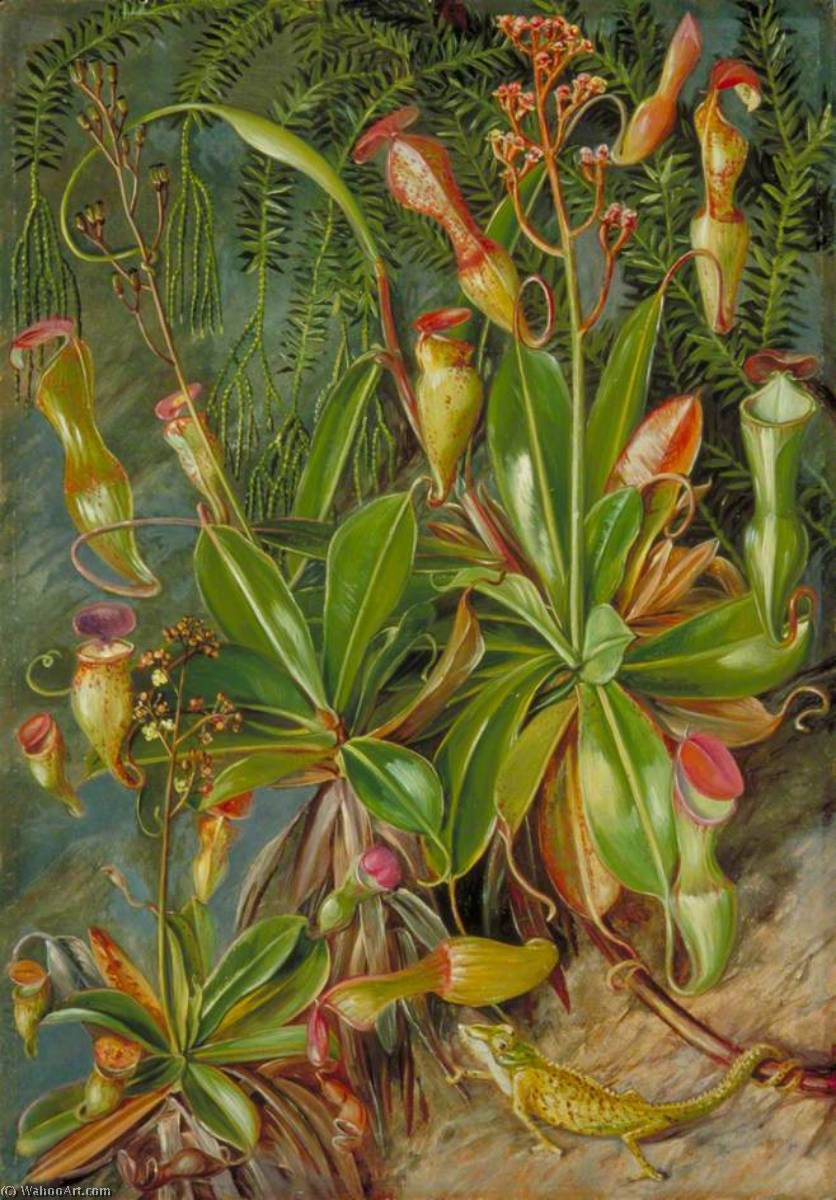 The Seychelles Pitcher Plant in Blossom and Chamaeleon, 1883 by Marianne North (1830-1890, United Kingdom) | Oil Painting | ArtsDot.com