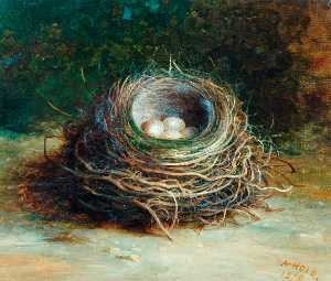 Abel Hold - Starling's Nest