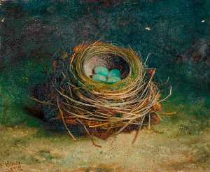 Abel Hold - Nest of a Song Thrush