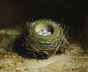 Abel Hold - Nest with Four Eggs