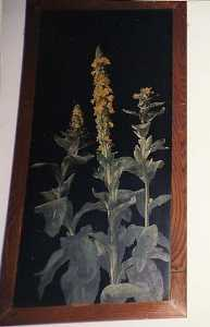 Horace G Hewes - (Yellow Mullein on Black ..