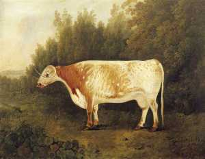 John Boultbee - 'Spotted Nancy' A Cow