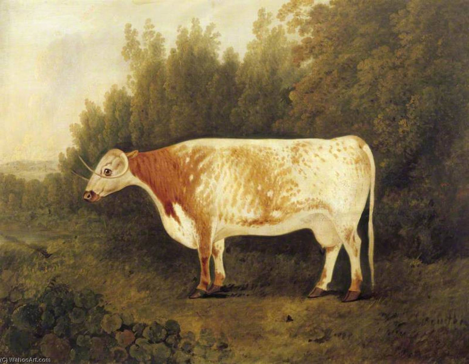`Spotted Nancy` A Cow by John Boultbee | Paintings Reproductions John Boultbee | ArtsDot.com