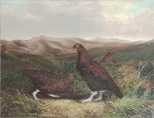 Benjamin Hold - Cumberland Moor and Grouse