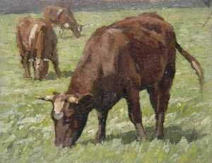 Gunning King - Grazing Cows