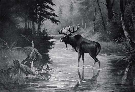 Water and Wood Scene with Moose, (painting), 1912 by Von Luerzer (1851-1913) | Art Reproduction | ArtsDot.com