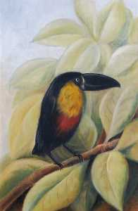 Rosalie Chichester - A Toucan on a Branch