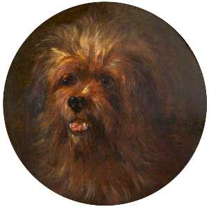 Rosalie Chichester - Head of a Yorkshire Terrier