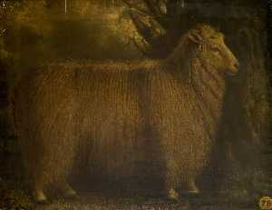 William Shiels - An Old Lincoln Ram