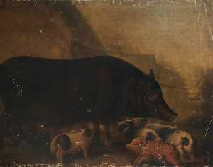 William Shiels - Siamese Sow and Piglets