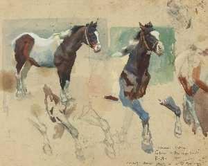Alfred James Munnings - Studies from the picture ..
