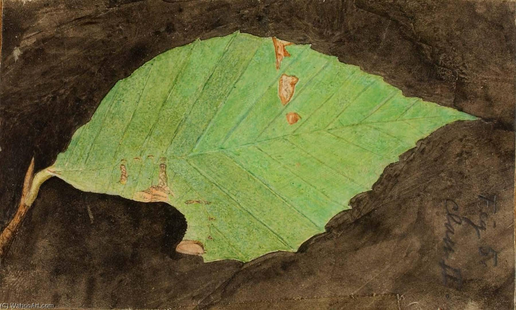 Smaller Spotted Beach Leaf Edge Caterpillar, study for book Concealing Coloration in the Animal Kingdom by Emma Beach Thayer | Museum Quality Reproductions | ArtsDot.com