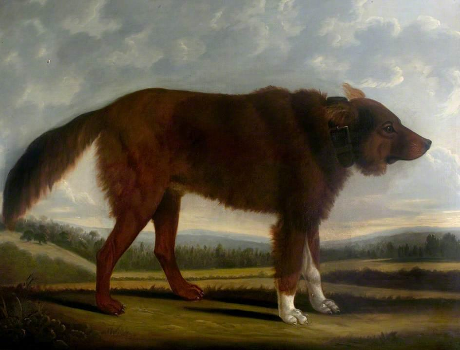 Lord Byron`s Dog `Lyon`, 1808 by Clifton Tomson | Painting Copy | ArtsDot.com