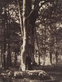 Forest of Fontainebleau, 1852 by Gustave Le Gray (1820-1884) | Art Reproductions Gustave Le Gray | ArtsDot.com