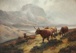 Henry Robinson Hall - Highland Cattle above Loc..