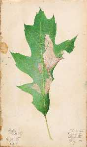 Gerald H Thayer - Oak Leaf Edge Caterpillar, study for book Concealing Coloration in the Animal Kingdom