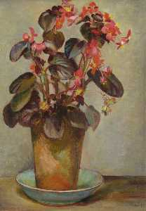Kathleen Cicely Melzi - Begonia in a Flower Pot