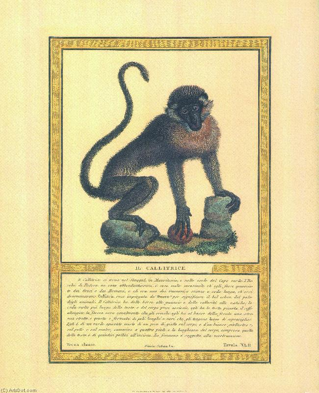 Grp873 (2) - Animals - Poster On Canvas - Monkey (AC99KS) | Print On Canvas Animals | ArtsDot.com