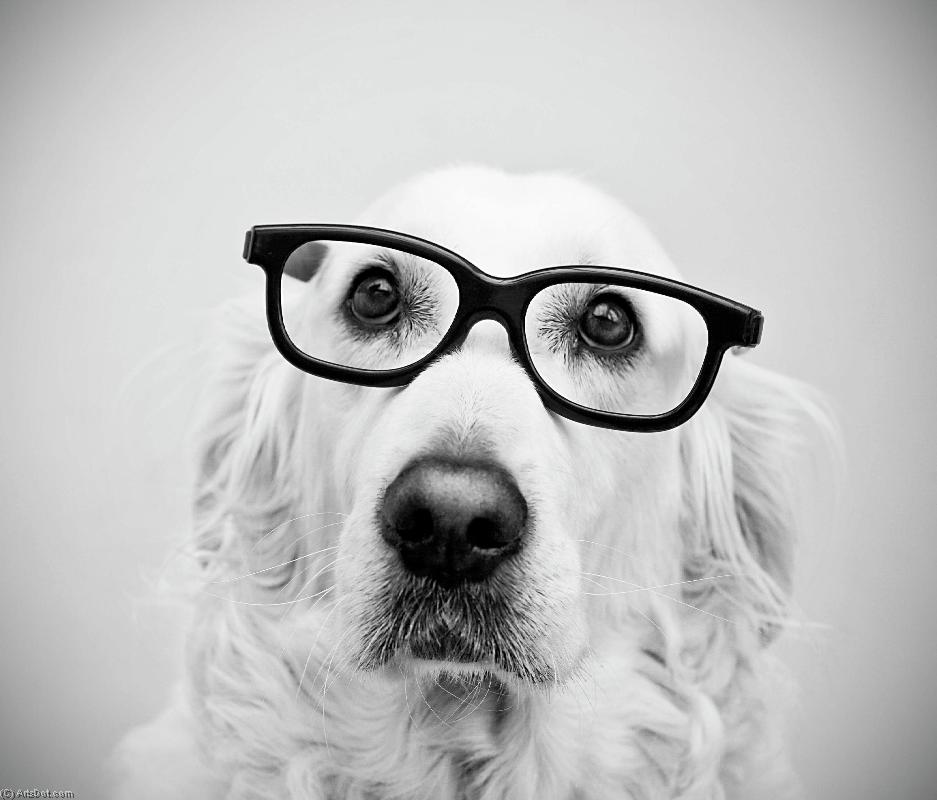 dog with glasses - 900×768