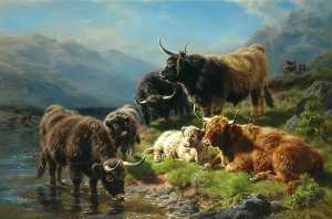 William Watson Ii - Highland Cattle